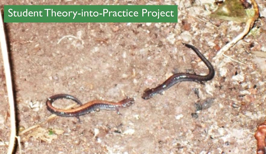 Ohio Wesleyan Salamander Habitat